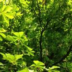 Bäume4